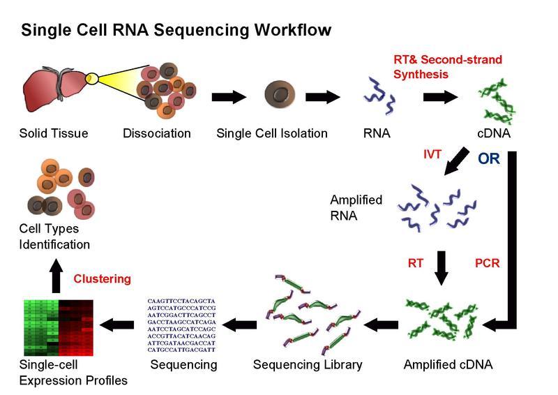 figures/RNA-Seq_workflow-5.pdf.jpg